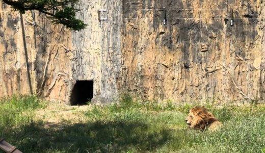 家族みんなで楽しめる長崎の動物園『九十九島動植物園 森きらら』
