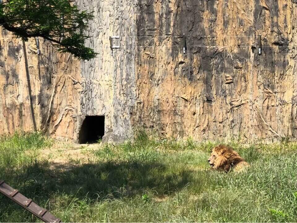 森きららのライオン