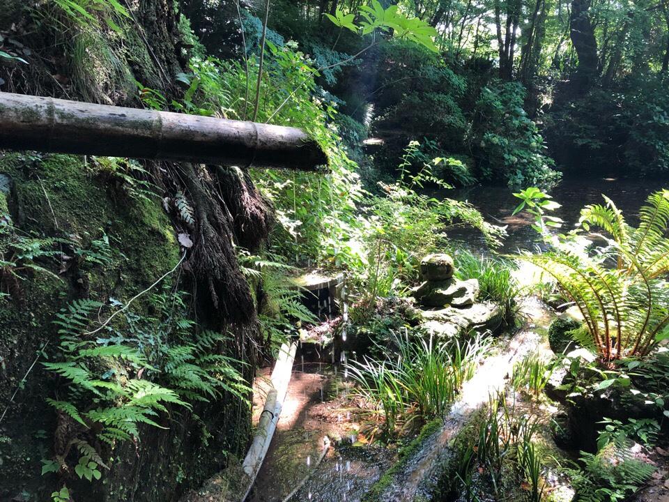 山の寺 邑居のお庭はどこを見ても神秘的