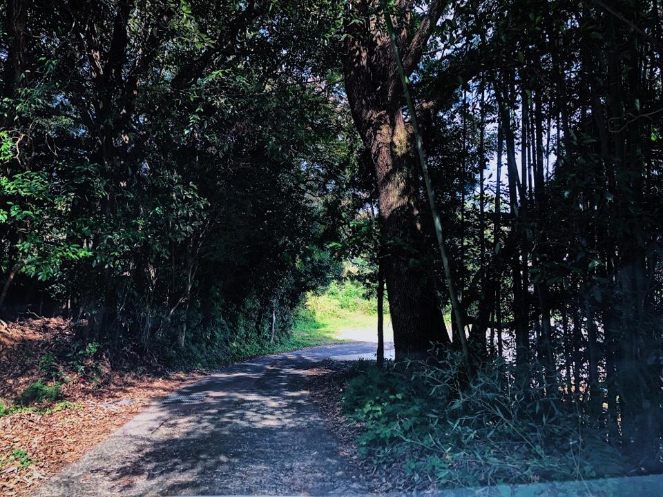 梅蓮への道がかなり狭いので注意