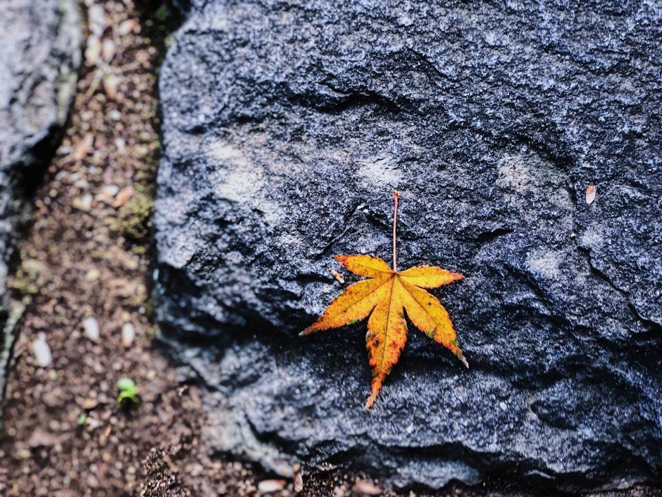 梅蓮で見つけたもみじの落ち葉
